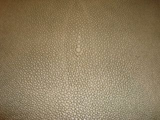 Shagreen Closeup