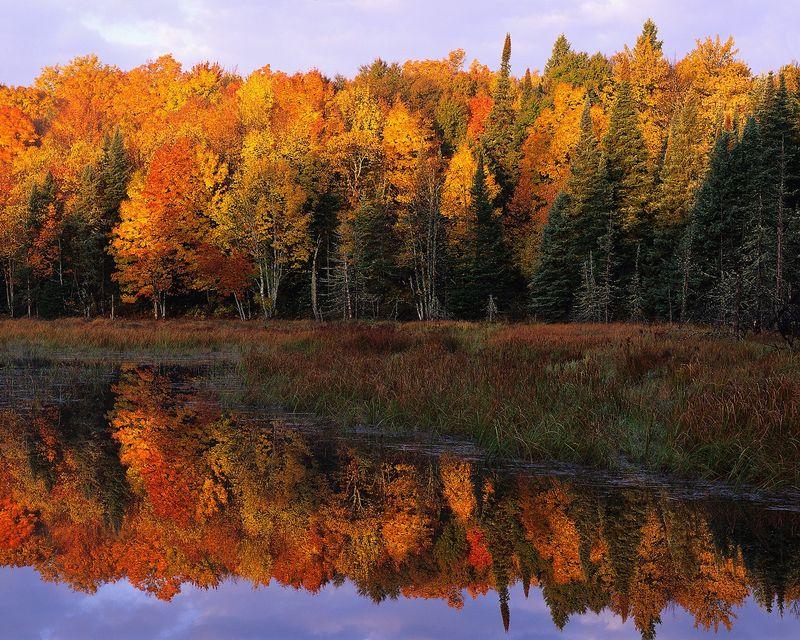 Fall Leaves on lake